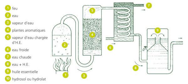 Los diferentes Extractos de planta. Que es CO2? Que es Aceite esencial?