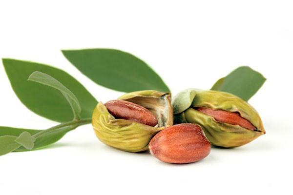 Top 10 beneficios del aceite de jojoba Puro Y Organico para la piel