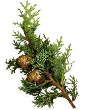 Aceite esencial de ciprés Puro y Organico