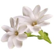 Fragancia cosmética natural Monoï Puro y Organico Colombia