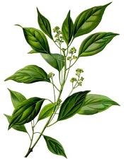 Aceite esencial de alcanfor Aroma-Zone