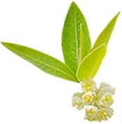 BIO Aroma-Zone Aceite esencialverbena Organica Colombia