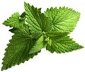Aceite esencial de Menta Aroma-Zone Puro y Organico Bogota Colombia