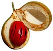 Aceite esencial de nuez moscada tienda Puro y Organico Bogota Colombia