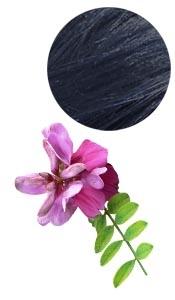 Indigo Puro y Organico Colombia BIO Color y cuidado del cabello Lawsonia inermis