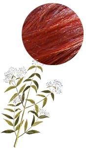 Color y cuidado del cabello Red Henna Yemen