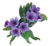 Orcanette planta colorante natural tinte Bogota Colombia